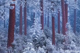 Winter-Twilight
